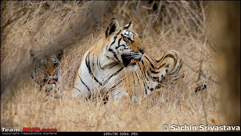 Jungles of MP: Pench National Park in May-img_2504.jpg