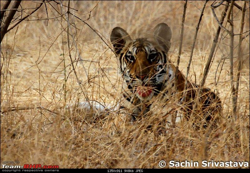 Jungles of MP: Pench National Park in May-img_2595.jpg