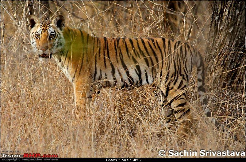 Jungles of MP: Pench National Park in May-img_2640.jpg