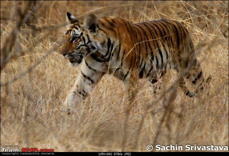Jungles of MP: Pench National Park in May-img_2659.jpg