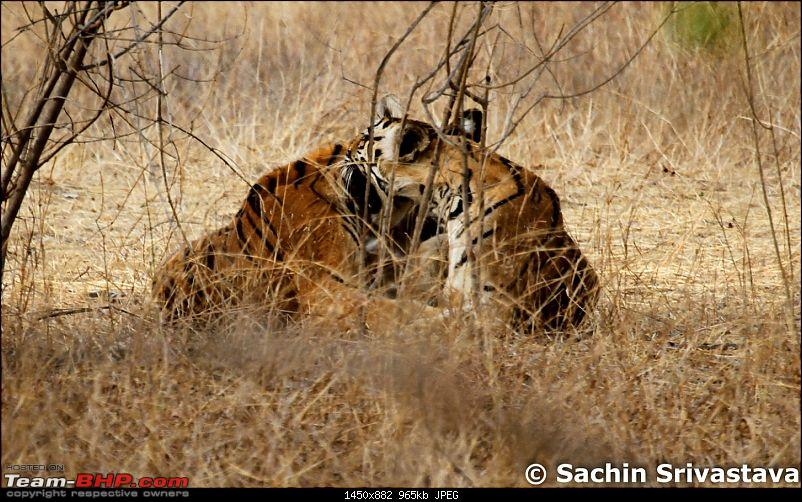 Jungles of MP: Pench National Park in May-img_2691.jpg