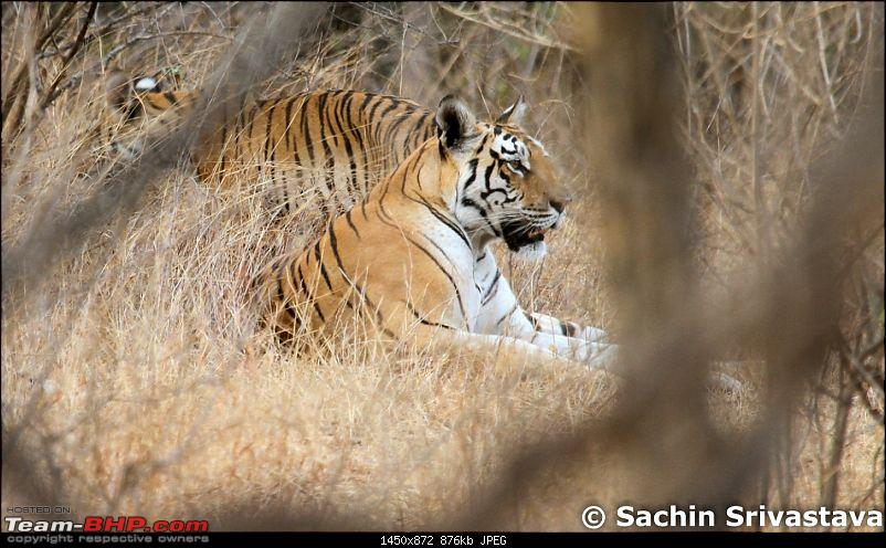 Jungles of MP: Pench National Park in May-img_2859.jpg