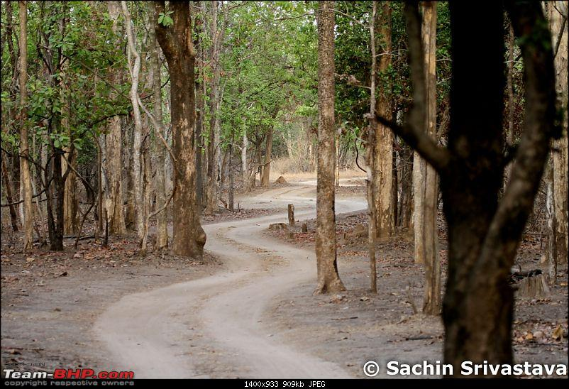 Jungles of MP: Pench National Park in May-img_2956.jpg