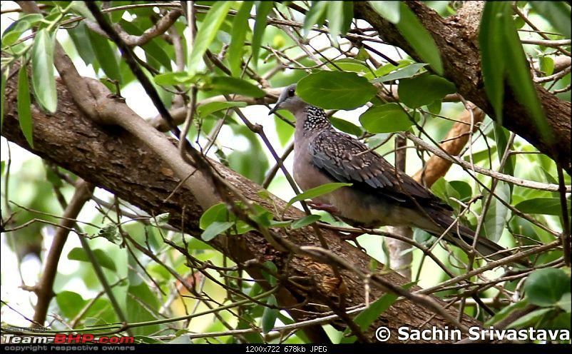 Jungles of MP: Pench National Park in May-img_3483.jpg