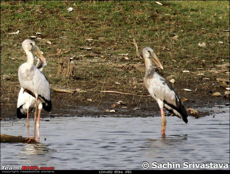 Jungles of MP: Pench National Park in May-img_3807.jpg