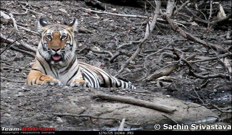 Jungles of MP: Pench National Park in May-img_3935.jpg