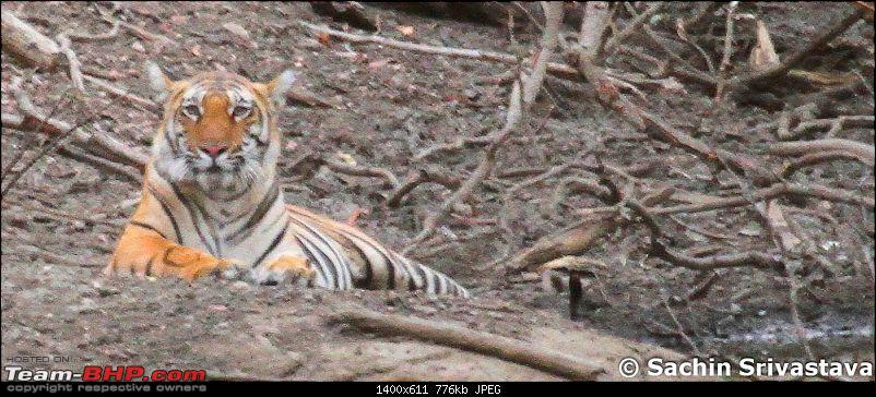 Jungles of MP: Pench National Park in May-img_3954.jpg
