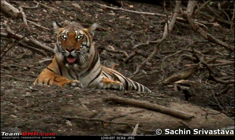 Jungles of MP: Pench National Park in May-img_3959.jpg