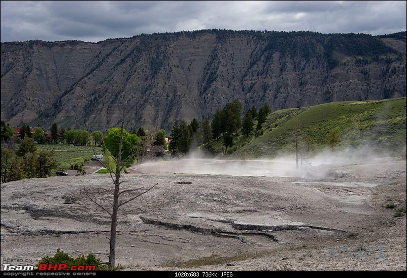 Yellowstone National Park : A Drive to Remember-dsc00496.jpg