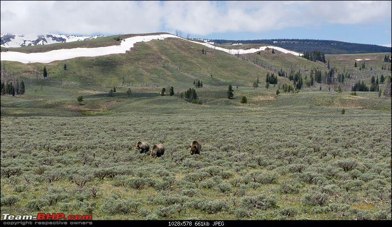 Yellowstone National Park : A Drive to Remember-dsc00694.jpg
