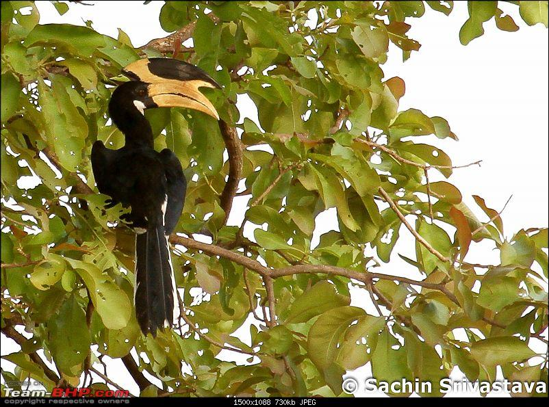 Jungles of MP: Pench National Park in May-img_4009.jpg