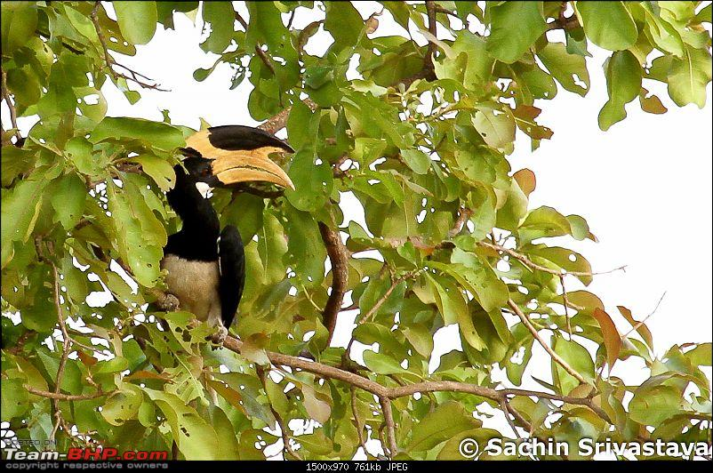 Jungles of MP: Pench National Park in May-img_4042.jpg