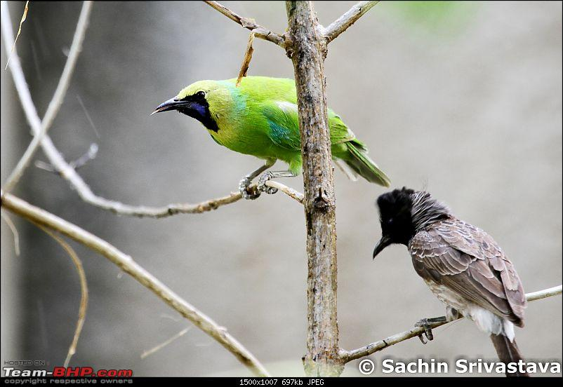 Jungles of MP: Pench National Park in May-img_4423.jpg