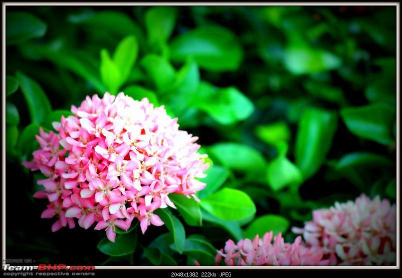 A shutterbug experiences around chennai - Weekend getaways in chennai-img_8657.jpg