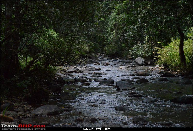 The Quest for Monsoons in the Malnad Region-dsc_0311.jpg