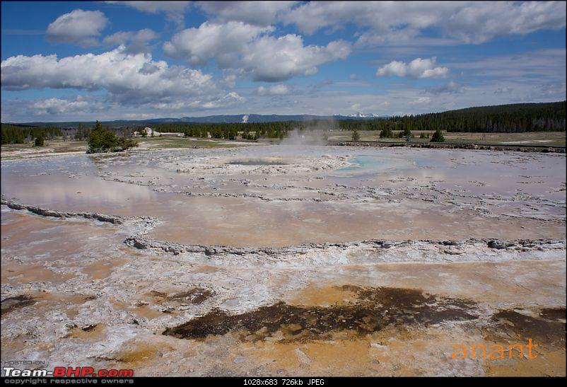 Yellowstone National Park : A Drive to Remember-dsc00751.jpg
