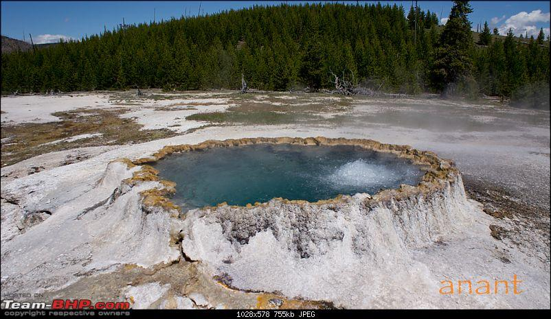 Yellowstone National Park : A Drive to Remember-dsc00761.jpg