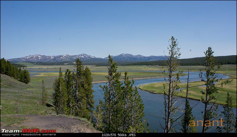 Yellowstone National Park : A Drive to Remember-dsc00960.jpg