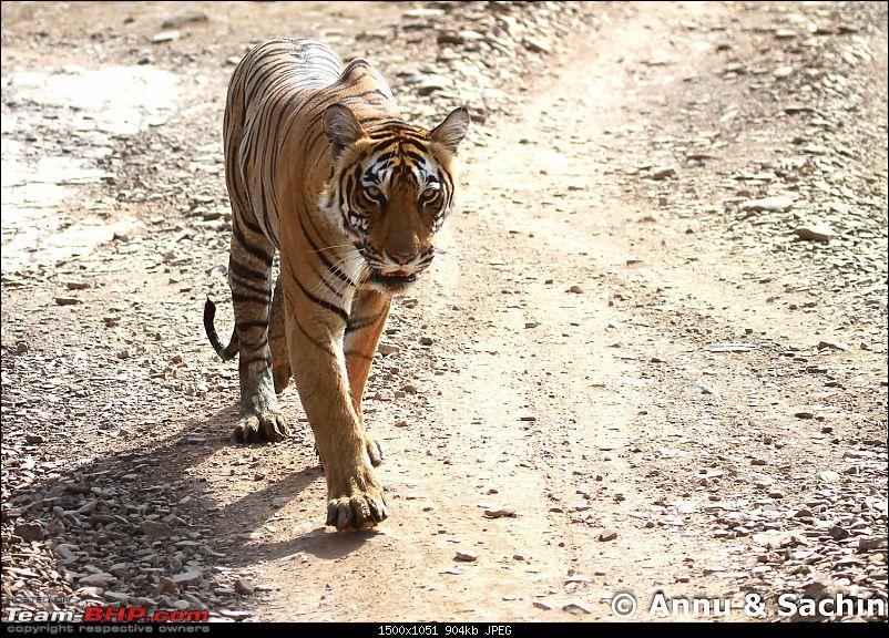 Ranthambhore National Park - Tigers and More!-img_9612.jpg
