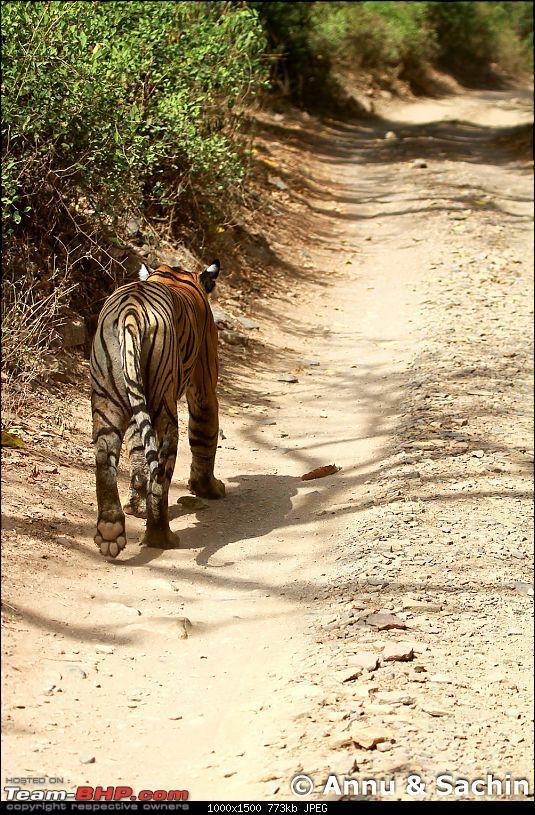 Ranthambhore National Park - Tigers and More!-img_9788.jpg