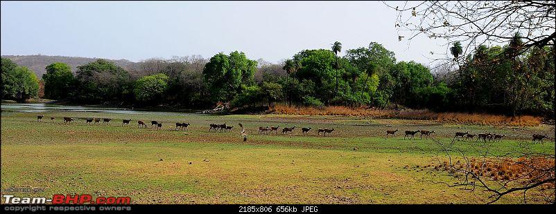 Gurgaon - Ranthambhore - Jodhpur - Gurgaon: Big Cats call again..!-7081.jpg