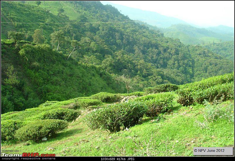 Dizzy Drive® : Wonderful Valparai (enchanted by Sinnadorai's Bungalow) and more!-34.jpg