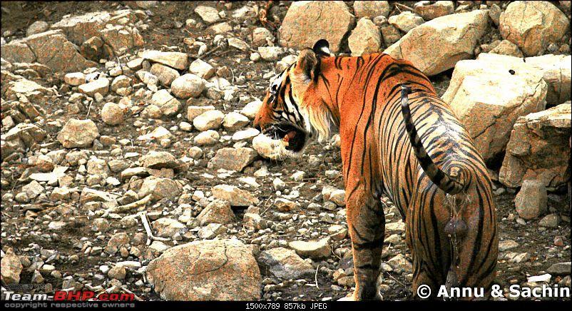 Ranthambhore National Park - Tigers and More!-img_9825.jpg
