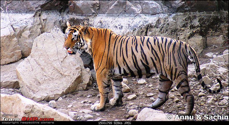 Ranthambhore National Park - Tigers and More!-dsc08934.jpg