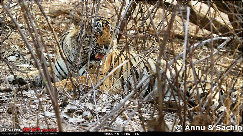 Ranthambhore National Park - Tigers and More!-img_9992.jpg