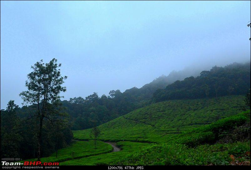 Fauji's Drivologues - Waiting for Rains in Kadamane Estate, Sakleshpur-dsc_1446.jpg