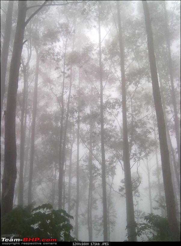 Munnar - A dash to the bewitching place inspired by Team-BHP-fog10.jpg