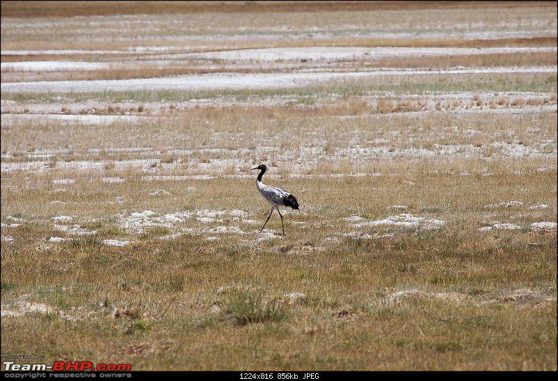 Reflecting on Driving Addictions - Bangalore to Spiti and Changthang-78.jpg