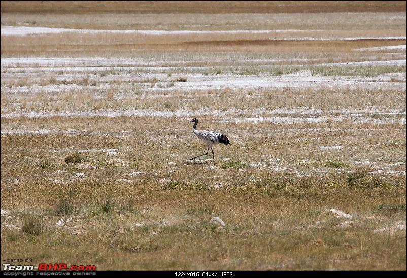 Reflecting on Driving Addictions - Bangalore to Spiti and Changthang-79.jpg