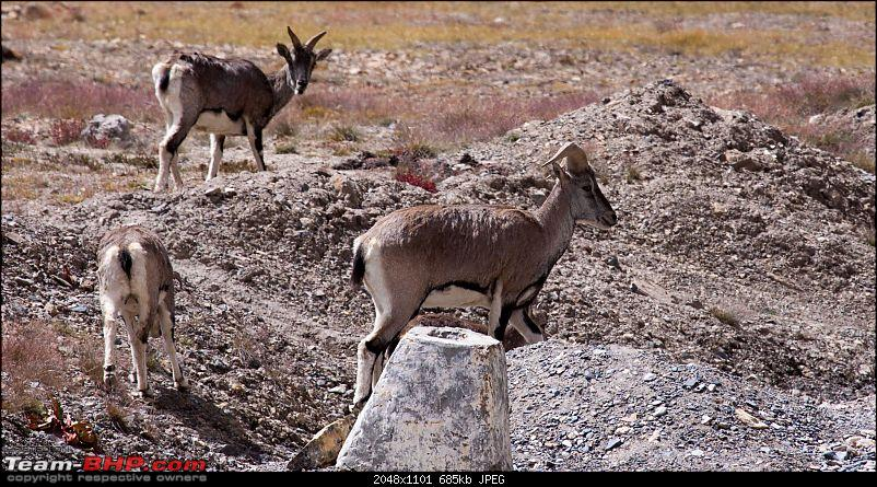 Reflecting on Driving Addictions - Bangalore to Spiti and Changthang-76.jpg