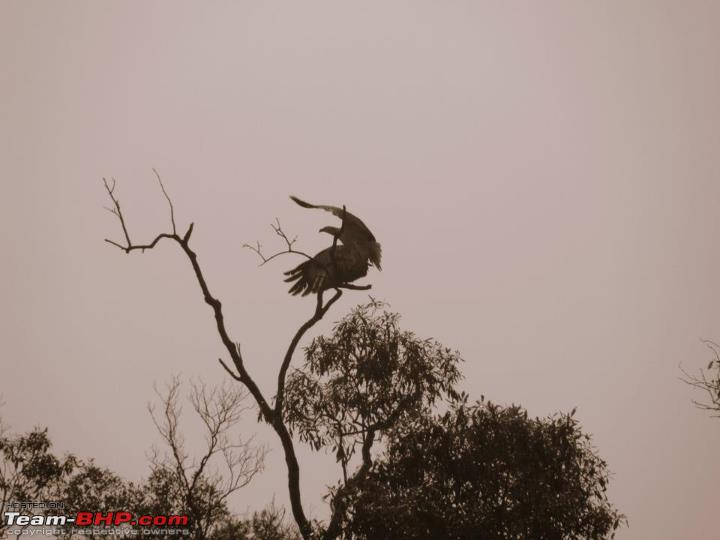 Name:  24 Fish eagle sets off for a catch.jpg