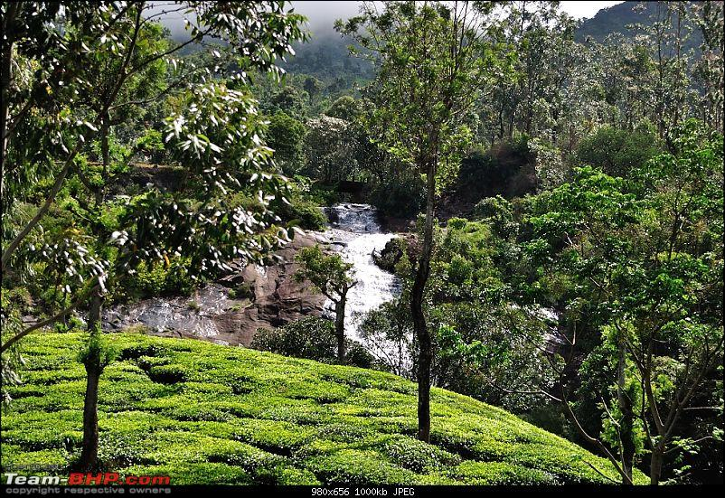 Valparai - The green carpet with great flora & fauna-valparai401.jpg