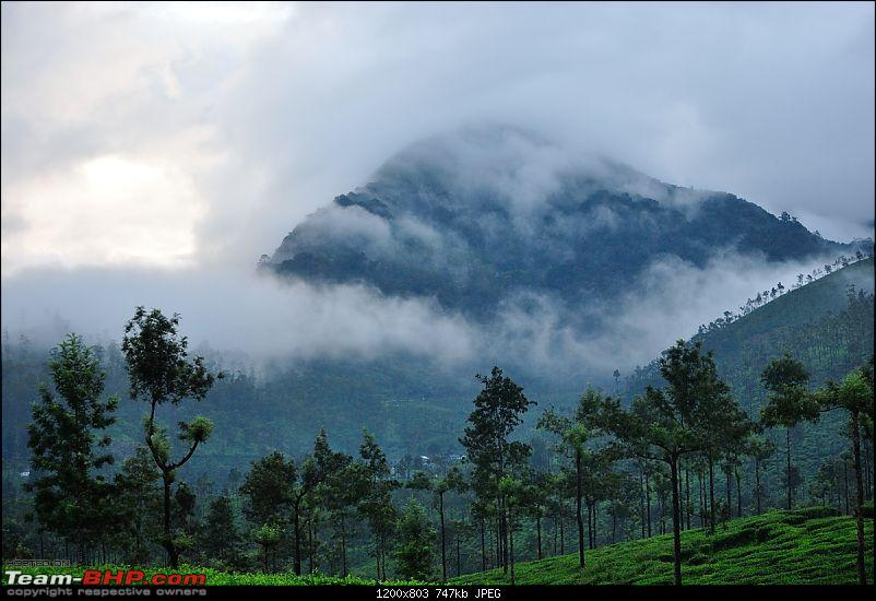 Valparai - The green carpet with great flora & fauna-valparai406.jpg
