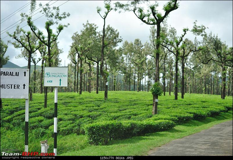Valparai - The green carpet with great flora & fauna-valparai414.jpg