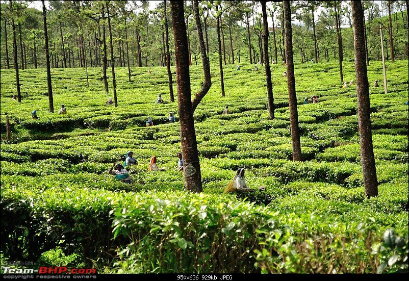 Valparai - The green carpet with great flora & fauna-valparaipalani433.jpg