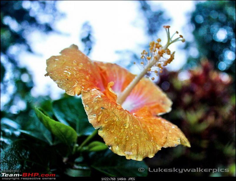 Sakleshpur - Been there yet ? (A drive in the rains)-45.jpg