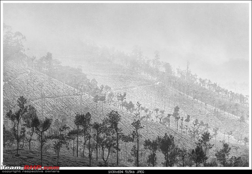 Stunning Valparai-img_5645-bw-web.jpg