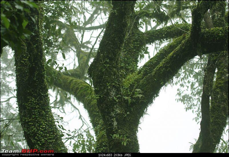A Greener Weekend in an unexplored forest - GAVI, Kerala-picture-060.jpg