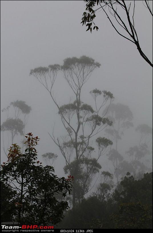 A Greener Weekend in an unexplored forest - GAVI, Kerala-picture-064.jpg