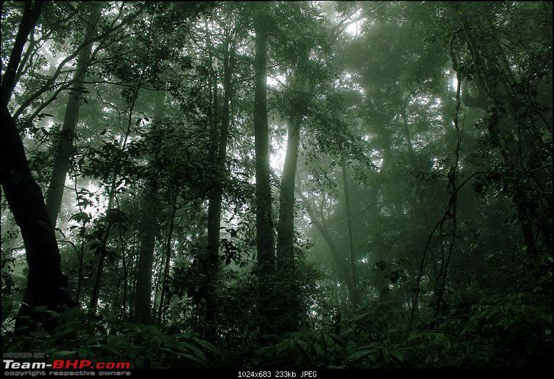 A Greener Weekend in an unexplored forest - GAVI, Kerala-picture-084.jpg