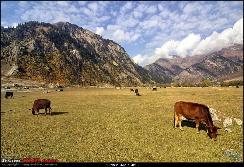 "Self-Drive Exploratory Expedition->Zanskar+Unknown Kashmir-> ""off-season October 2011-img_9729.jpg"