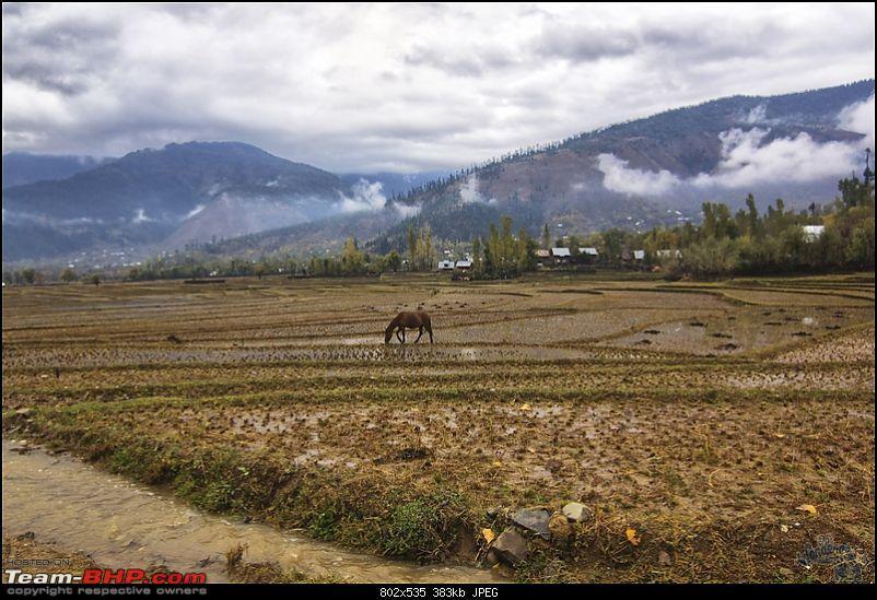 "Self-Drive Exploratory Expedition->Zanskar+Unknown Kashmir-> ""off-season October 2011-img_0275.jpg"