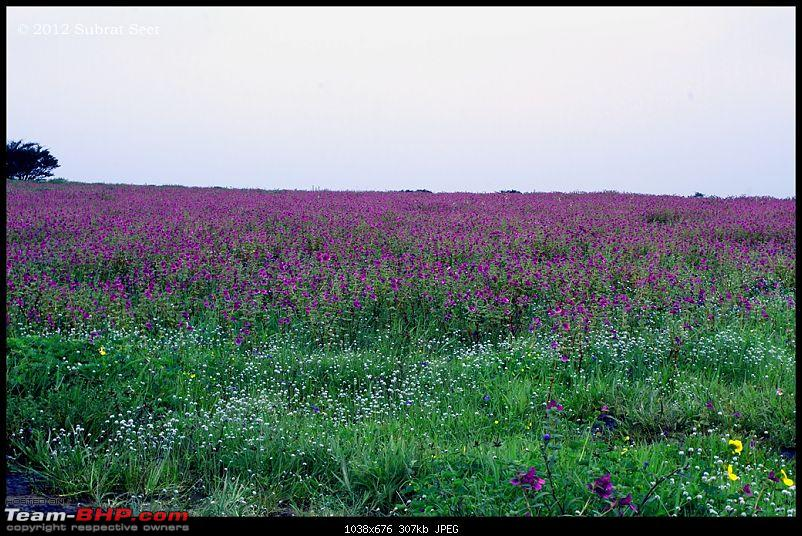 Kas - The Valley of Flowers-kas18-copy.jpg