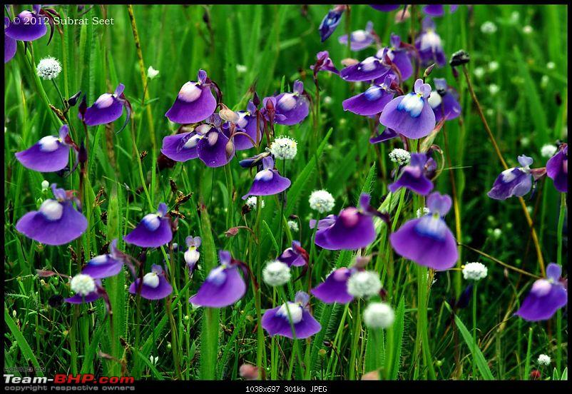 Kas - The Valley of Flowers-kas87-copy.jpg