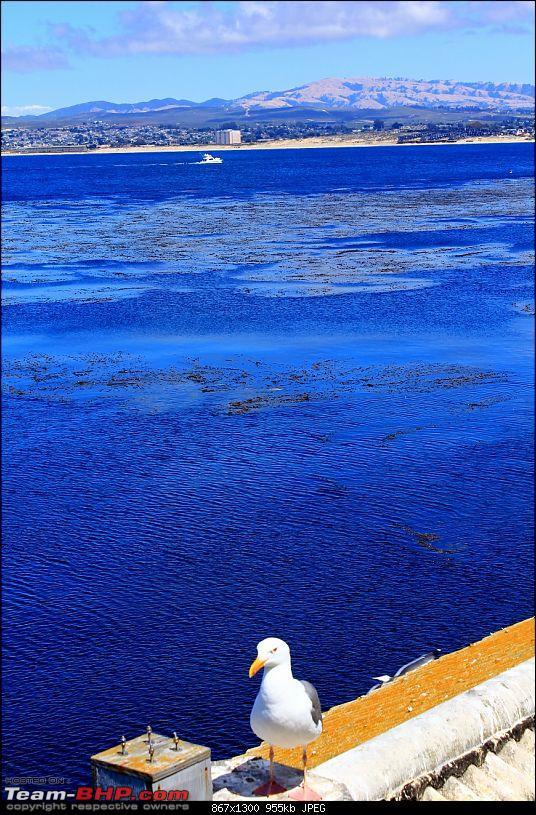 In a Pontiac Solstice to Mystical Monterey, CA-img_1943-867x1300.jpg