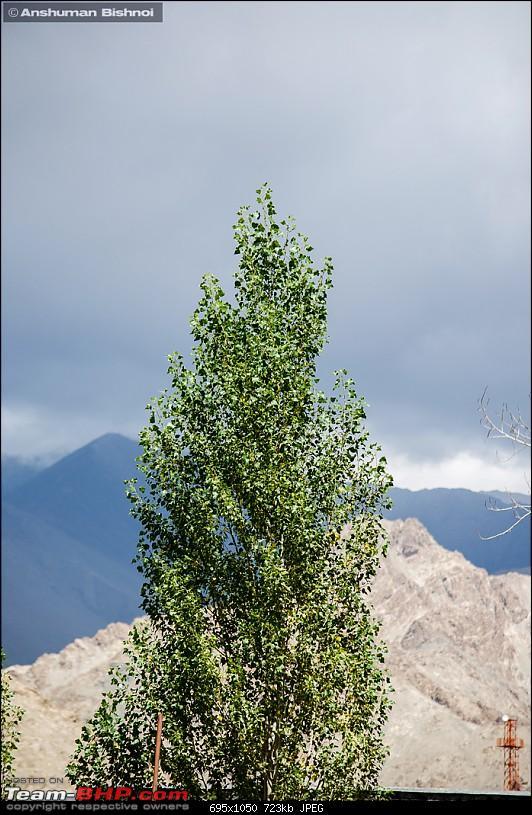 Ladakh in my Laura- Travelogue-dsc_8888.jpg